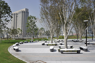 都立 シンボルプロムナード公園の写真