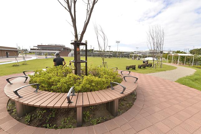 柳島スポーツ公園(茅ヶ崎市 )の写真